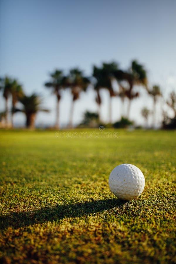 Palla da golf su erba verde, palme su fondo fotografia stock libera da diritti