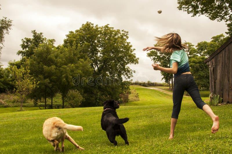 Palla di lancio della ragazza per i labrador retriever fotografia stock