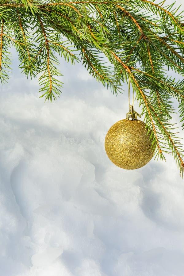 Palla dorata di Natale sul ramo attillato fotografie stock libere da diritti