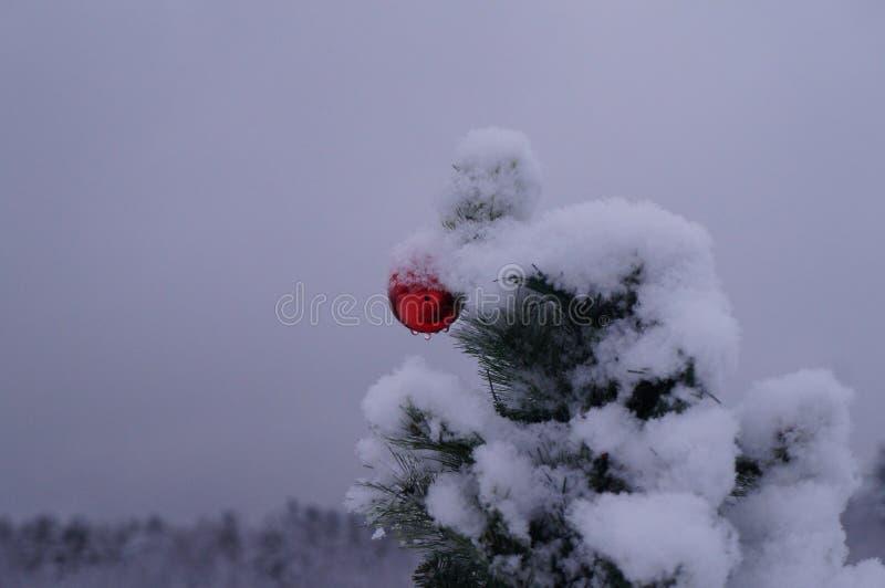 Palla sola di Natale all'aperto fotografia stock