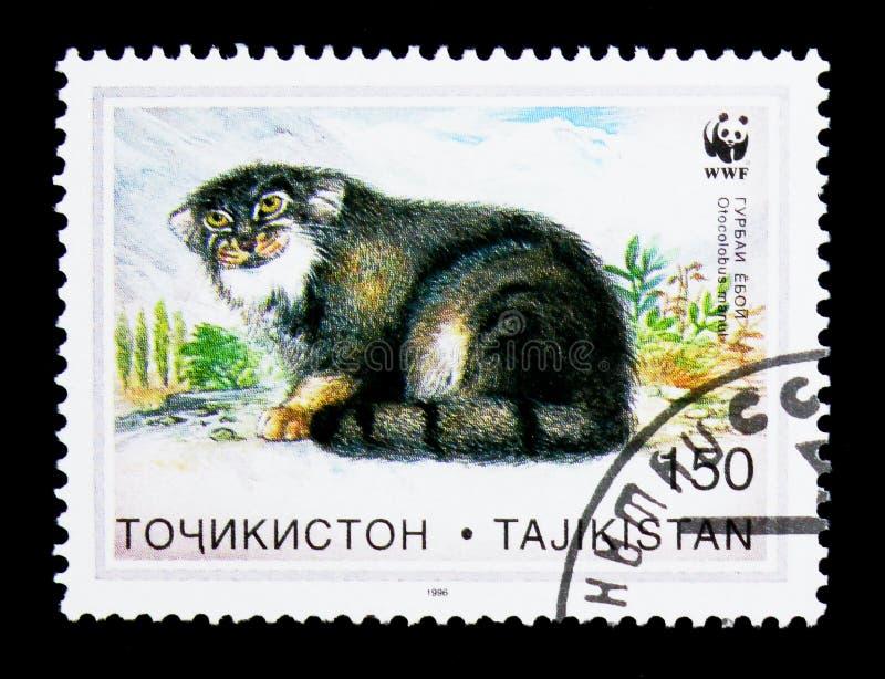 Pallas\ 's Kat (Otocolobus manul), W W F Wilde Katten serie, circa 1 royalty-vrije stock fotografie