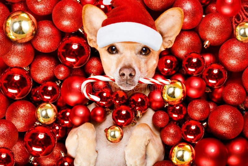 Palle del cane e di natale del Babbo Natale di Natale immagine stock