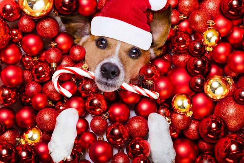 Palle del cane e di natale del Babbo Natale di Natale come fondo immagine stock