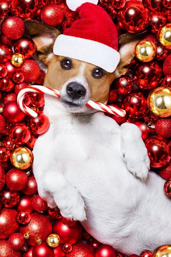 Palle del cane e di natale del Babbo Natale di Natale come fondo fotografie stock libere da diritti