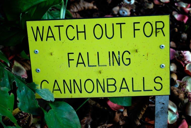 Palle di cannone di caduta del segnale di pericolo dall'albero della palla di cannone fotografia stock libera da diritti