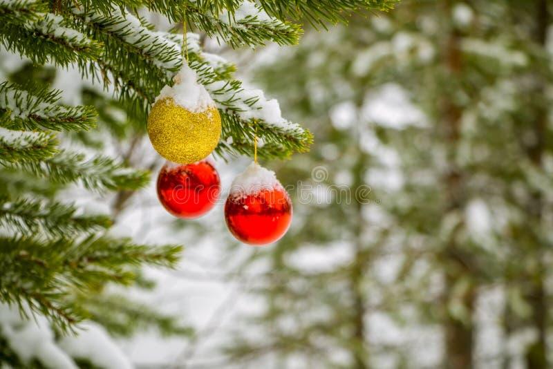 Palle di Natale su un ramo di una foresta di inverno immagine stock libera da diritti