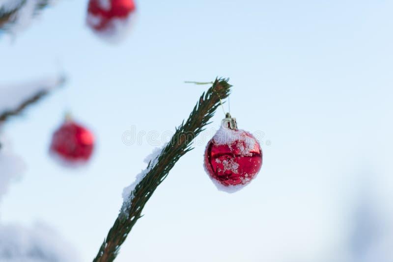 Palle di Natale sul pino immagini stock