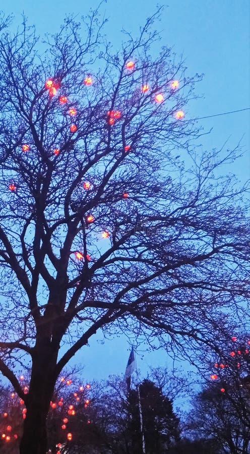 Palle sull'albero immagine stock libera da diritti
