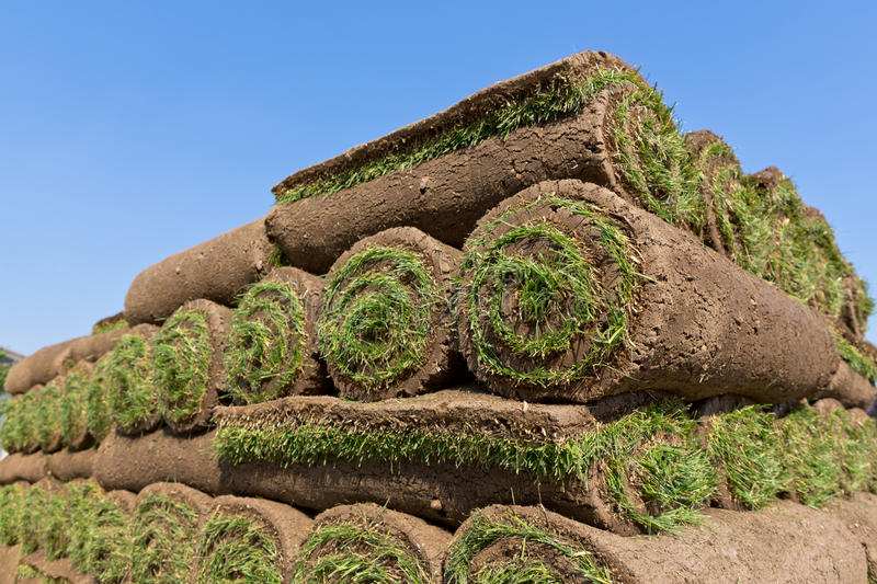 Pallets of sod. For new lawn royalty free stock photography