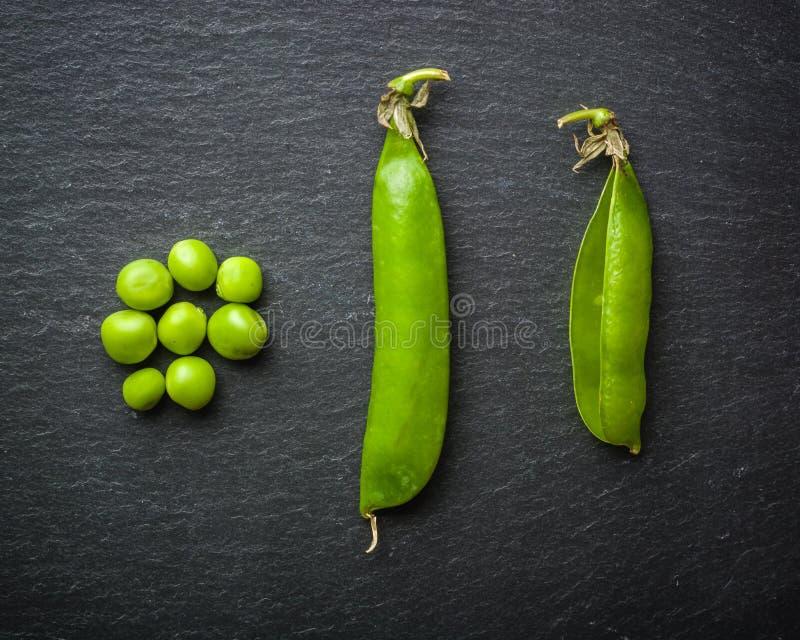 Palline aperte e chiuse dei piselli su un fondo di pietra nero Frutta fresca Raccolta Copi lo spazio fotografia stock