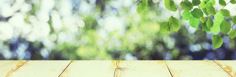 palline di colore verde stilizzato su uno sfondo naturale astratto e sfocato fotografia stock