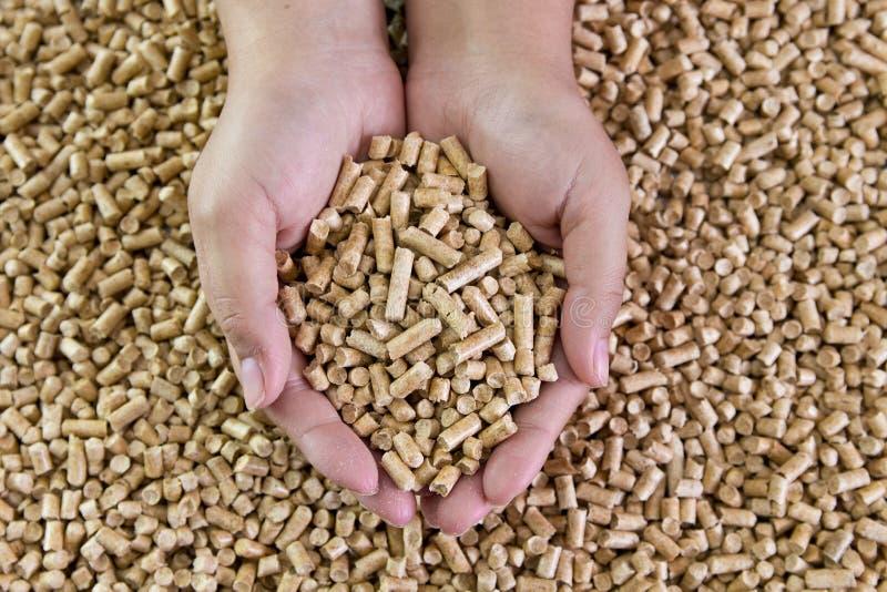Palline di legno in mani femminili Combustibili biologici Combustibile biologico alternativo fotografie stock
