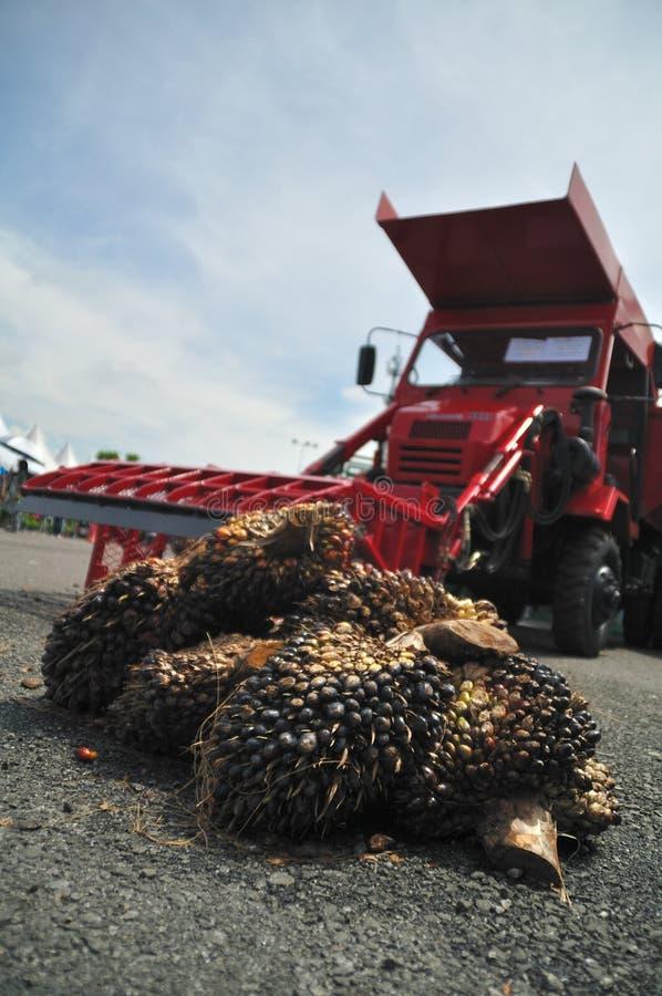 Palmöl lizenzfreie stockfotografie