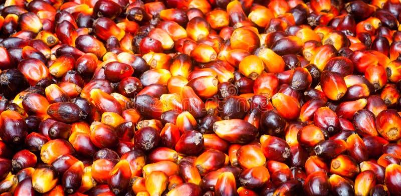 Palmöl-Früchte lizenzfreies stockbild
