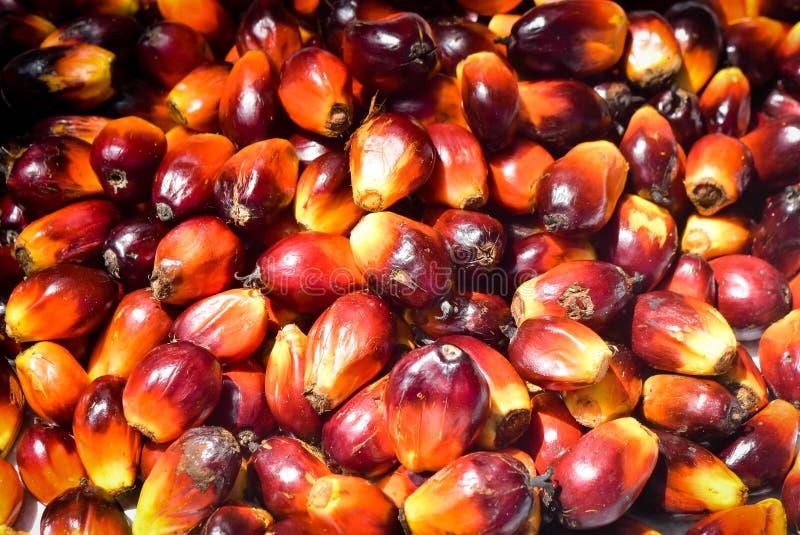 Palmöl-Früchte lizenzfreie stockfotografie