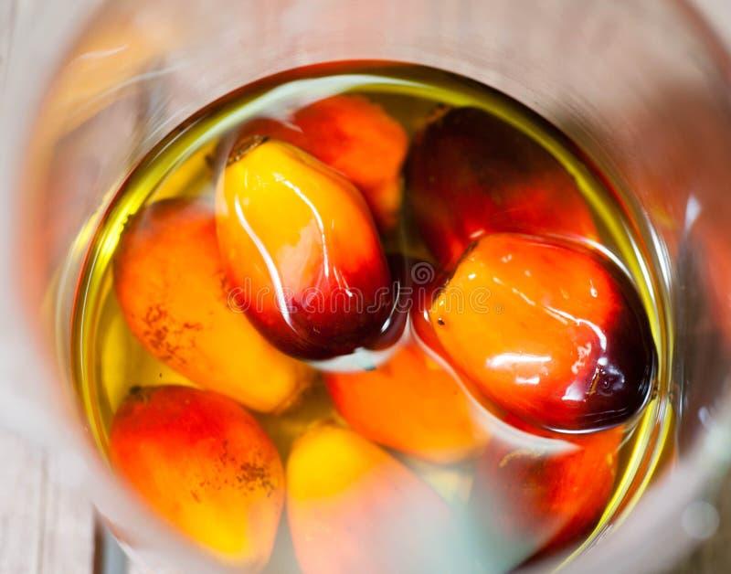 Palmöl-Früchte lizenzfreies stockfoto