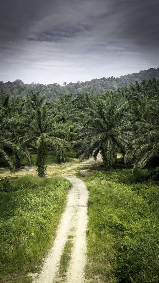 Palmölplantagen stockfoto
