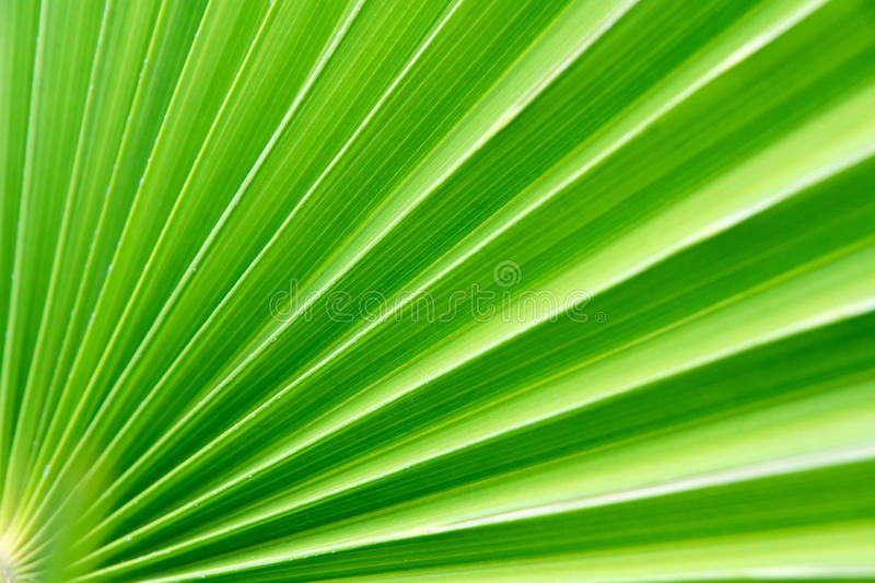 Download Palm stock image. Image of hemp, dwarf, color, nature - 13993837