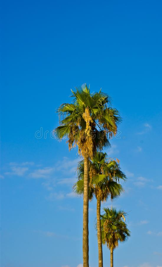 Download Palm stock photo. Image of paradise, cloud, holiday, dream - 14810992