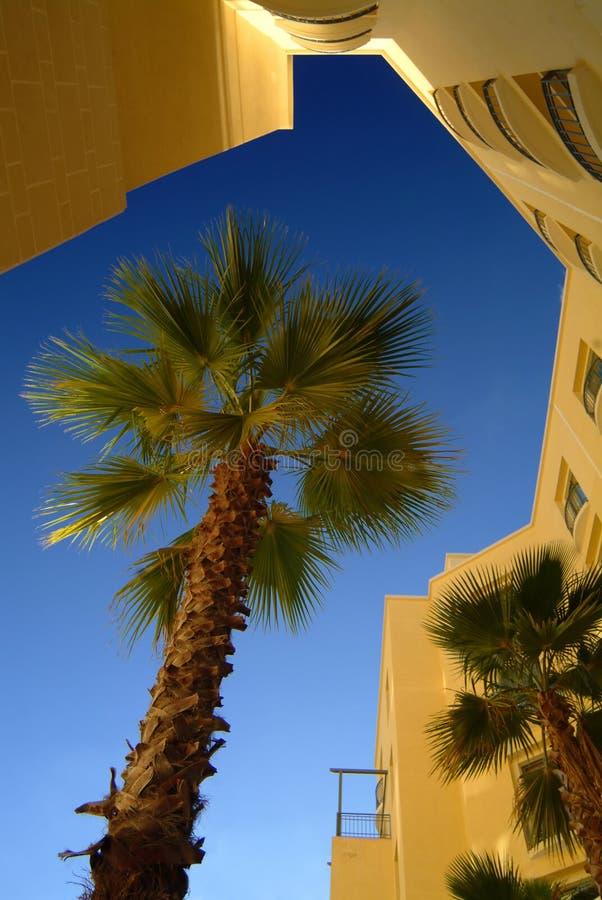 Palm stock foto's
