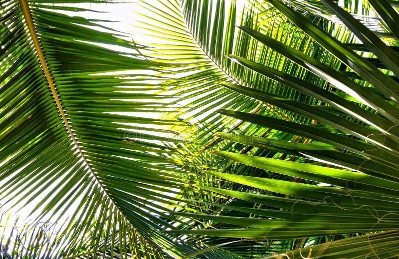 Download Palm stock photo. Image of jungle, plant, maldives, fauna - 18763310