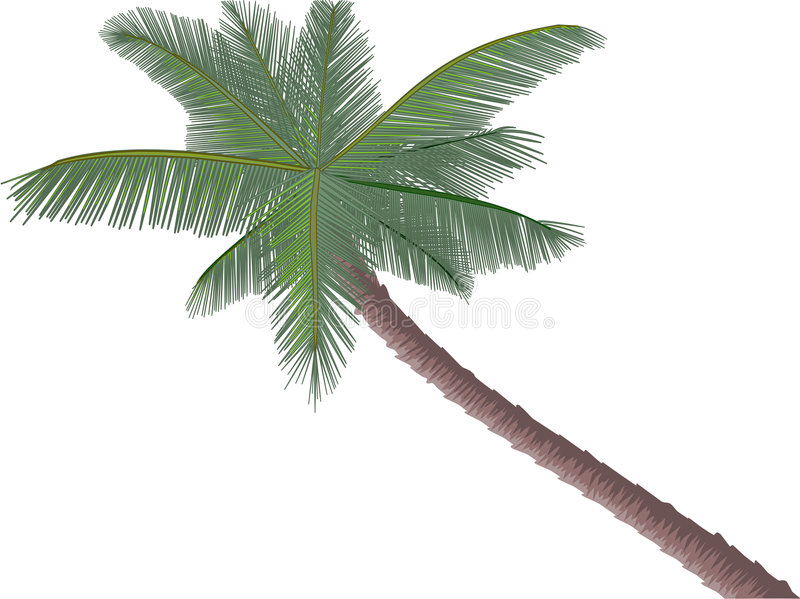 Palm vector illustratie