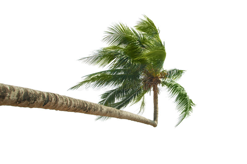 Download Palm stock image. Image of paradise, vacation, lounge - 21349151