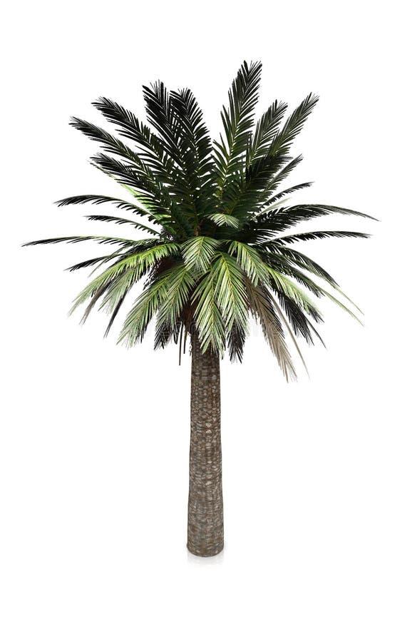 Download Palm Royalty-vrije Stock Afbeeldingen - Afbeelding: 21900749