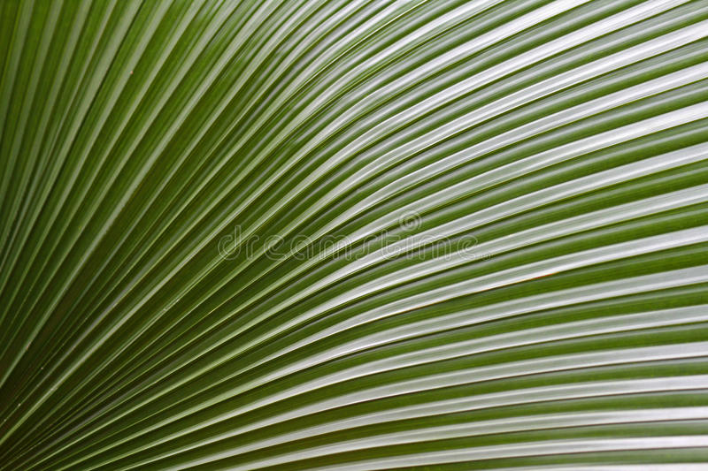 Download Palm stock photo. Image of peaceful, leaves, form, shape - 23245978