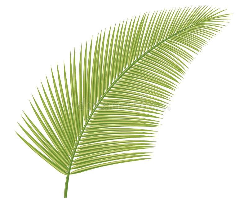Palm Stock Photo