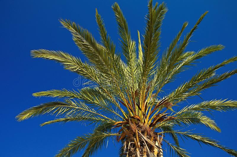 palm royaltyfri bild