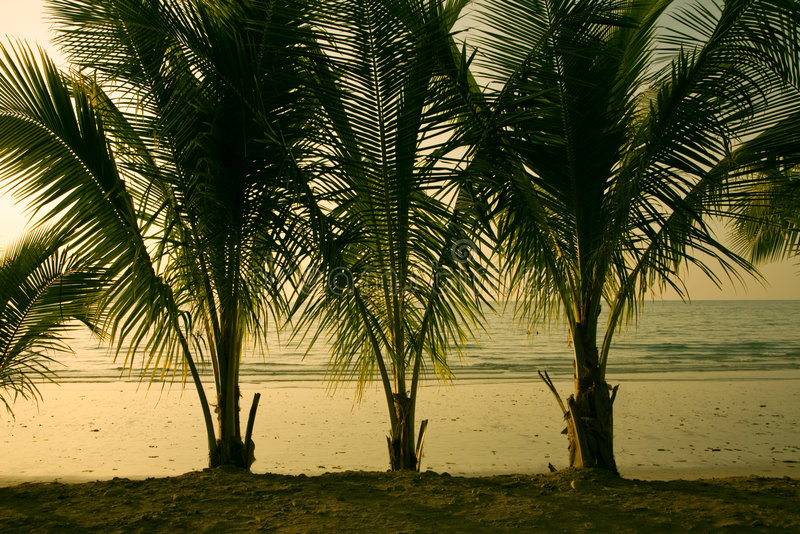 Download Palm stock photo. Image of evening, nature, calm, summer - 7937844
