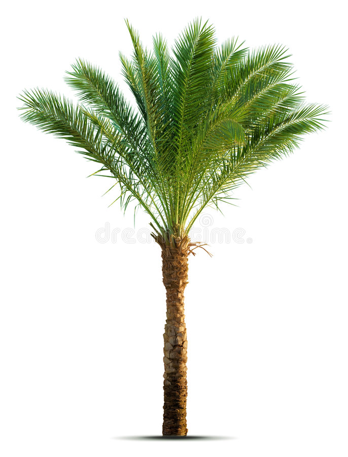 Palm royalty-vrije stock fotografie