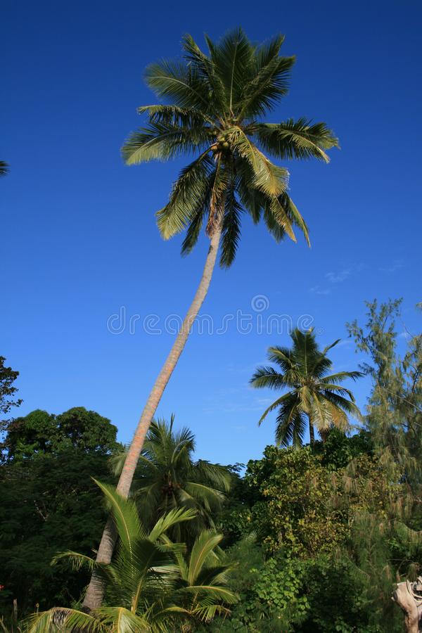 Download Palm stock image. Image of palm, trees, tropic, colors - 8596831