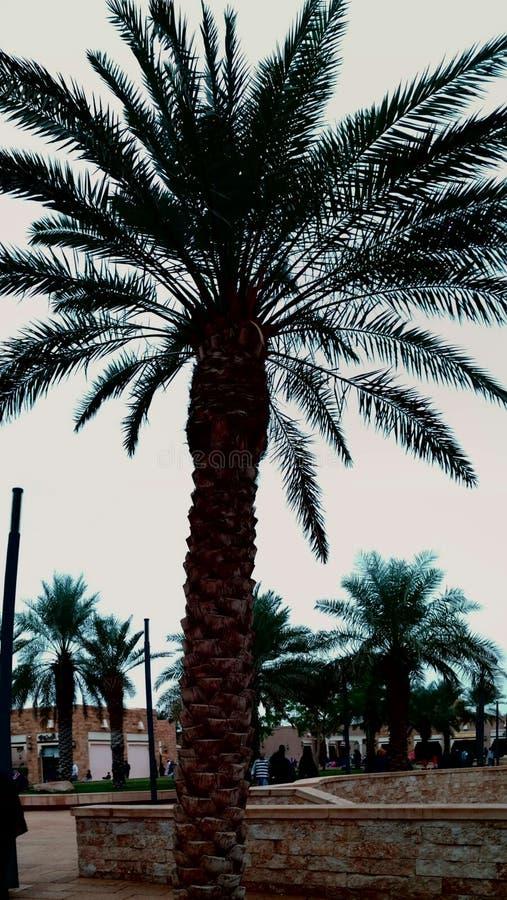 palm arkivbilder