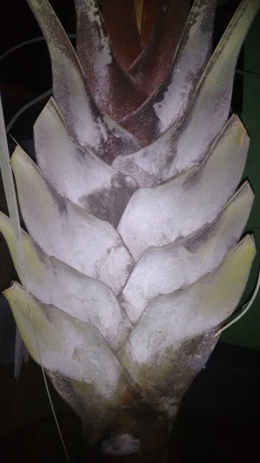 palm fotografering för bildbyråer