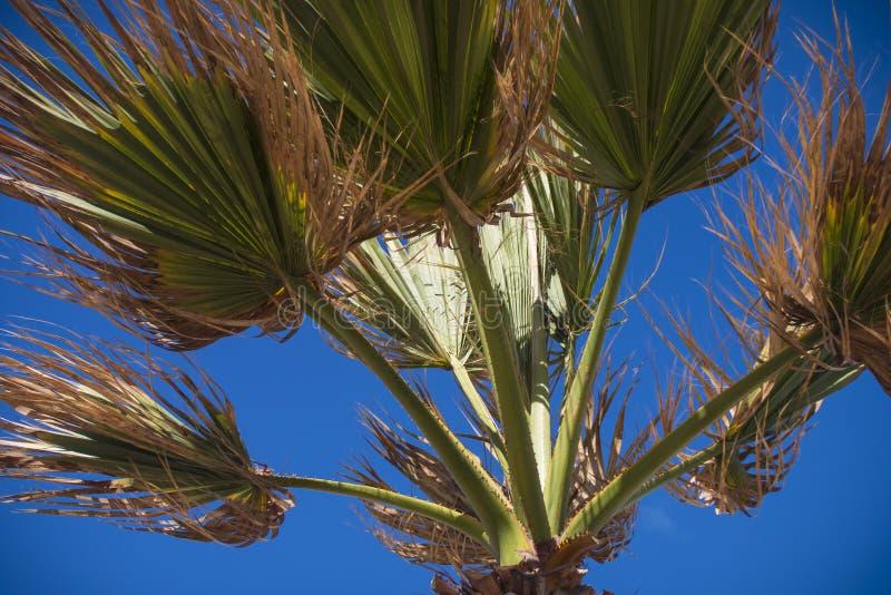 palm royaltyfri fotografi