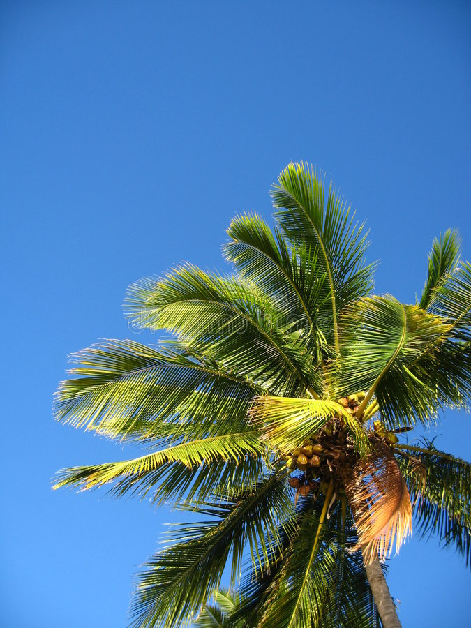 The palm against a blue sky royalty free stock image