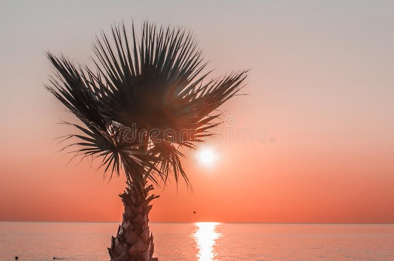 Palm against the sunset in the black sea. Beautiful sunset. the sun sets in the depths of the sea. view of the skyline. silhouette stock photo