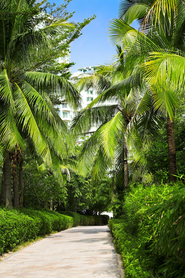 Download Palm alley stock photo. Image of nature, outdoor, china - 17459406