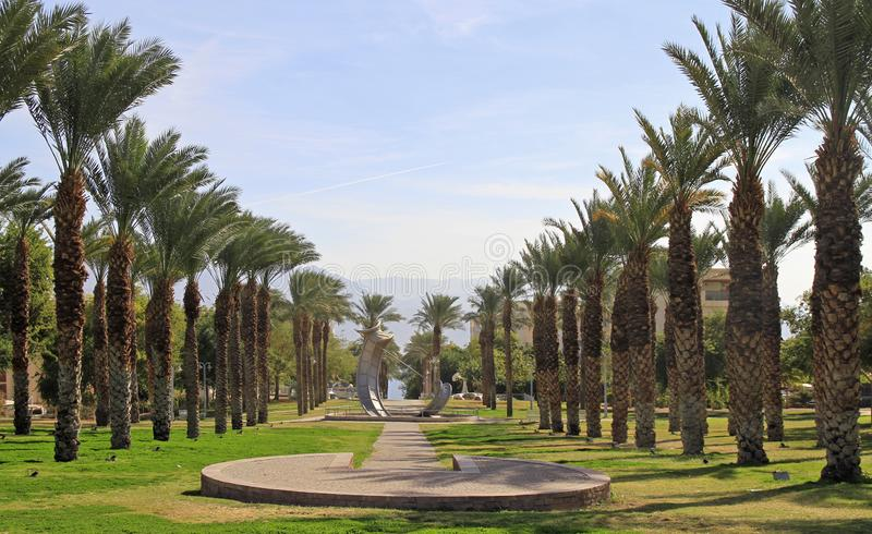 Palm alley in city Eilat. The southern Israel royalty free stock image