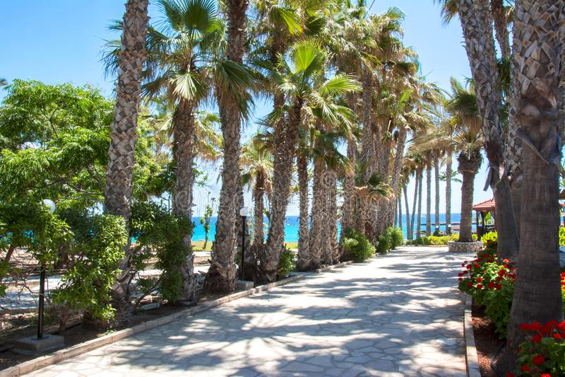 Palm alley in Protaras, Cyprus royalty free stock photography