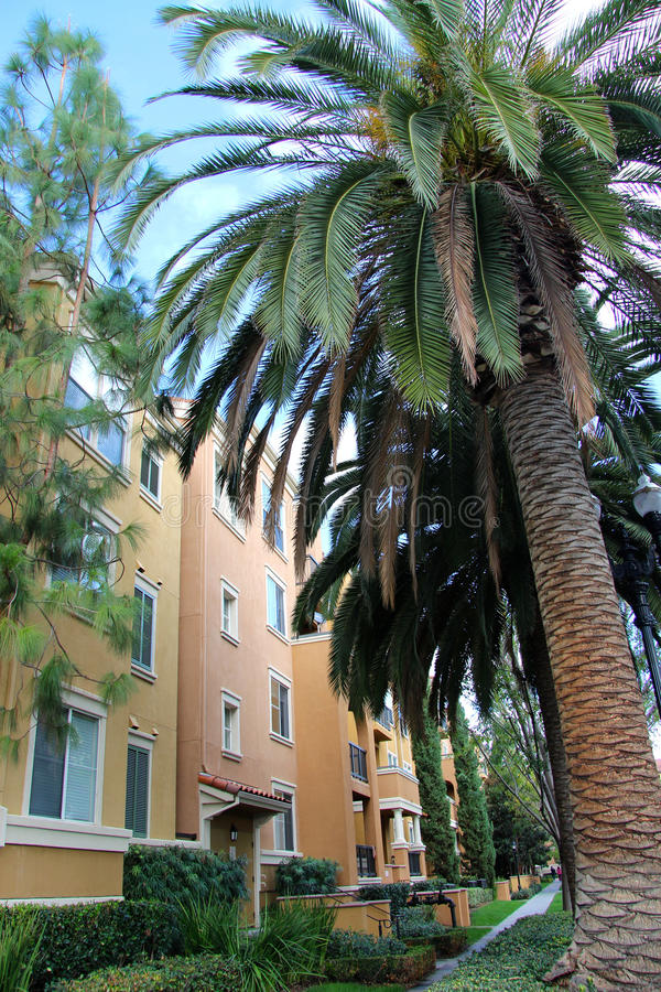 Palm and apartments. Tall palm trees and a beautiful facade of a residential building were photographed in the city of San Jose, California, United States stock photos