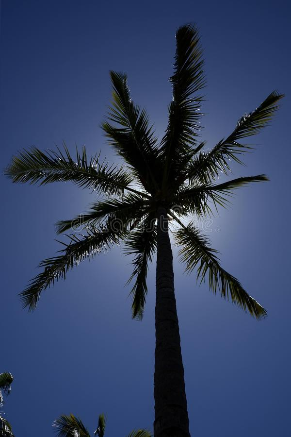The palm royalty free stock photo
