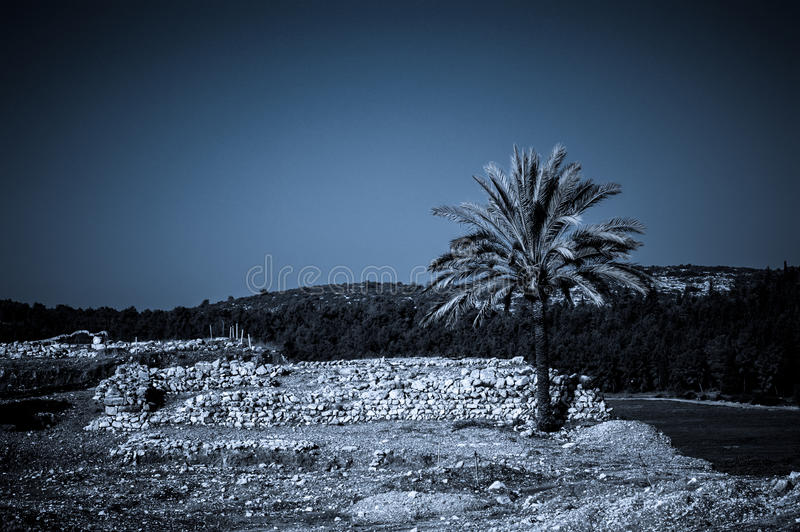 Palm in Armageddon, Israel. Dramatic scenery at the archaeological site at the Tel Megido (Armageddon) in Israel - symbol of Apocalypse royalty free stock images