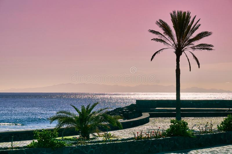 Palm babassu sunset sky background. Pink sunset by the ocean.View of La Gomera Island from Tenerife stock images