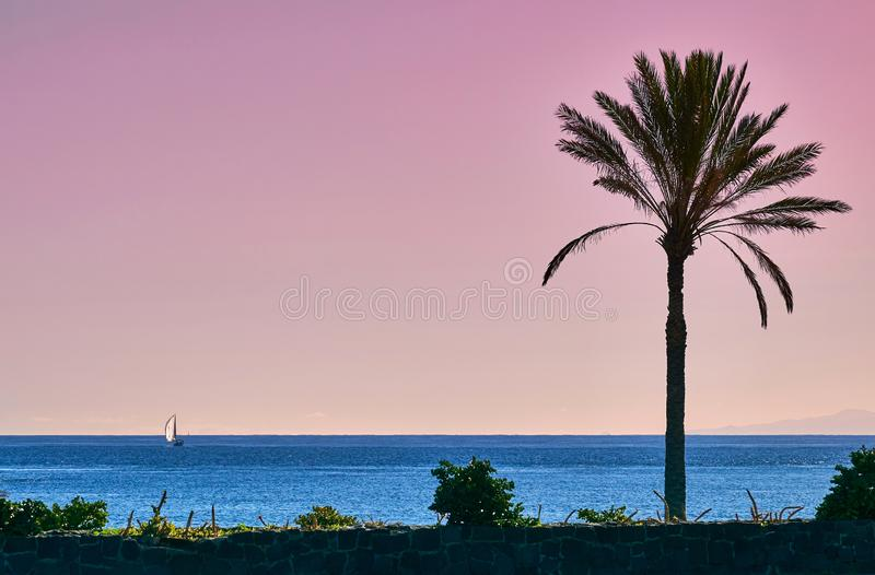 Palm babassu sunset sky background. Pink sunset by the ocean.View of La Gomera Island from Tenerife royalty free stock photos