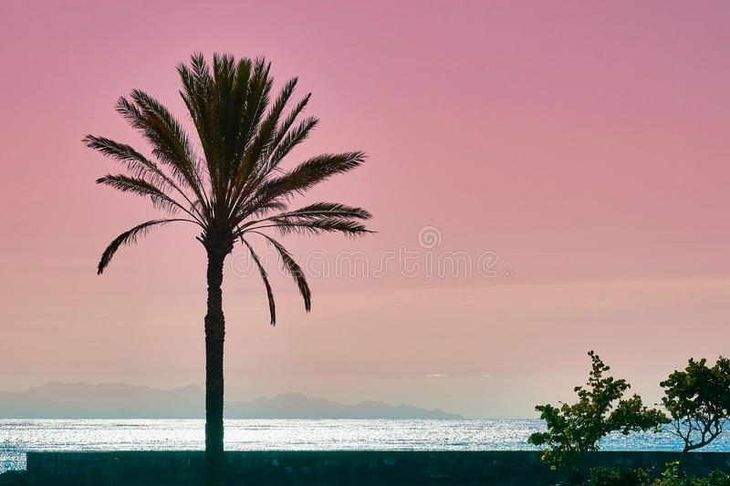 Palm babassu sunset sky background. Pink sunset by the ocean.View of La Gomera Island from Tenerife royalty free stock photography
