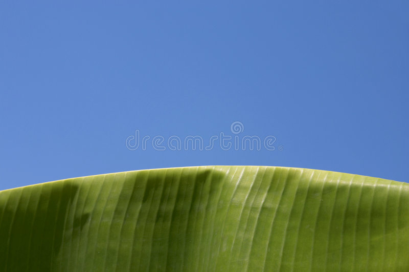 Download Palm, Banana Leaf Royalty Free Stock Photography - Image: 893007