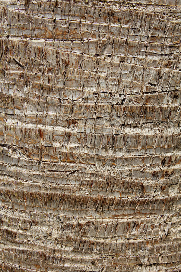 Download Palm bark texture stock image. Image of generic, brown - 20191767